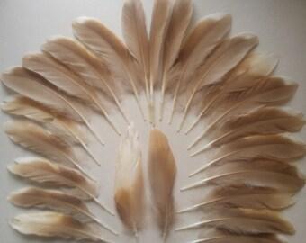 24 Medium Golden Brown Duck Feathers