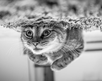 Stuck - Cat Photography Print, black & white photography, upstate ny, wall art, EyeWasHere