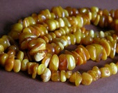 Genuine Baltic Egg Yolk Amber Flapper Necklace 36 inches long