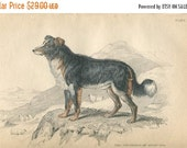 SALE Antique Original Hand Colored Steel Engraved 1843 Book Plate Print Jardine Naturalist Library Mammalia Canine Dogs #5
