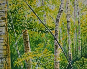 Birch and Poplar