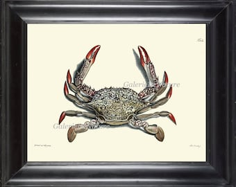 Crab Print 40 Beautiful Antique Sea Ocean Nature Beach Home Vintage Bathroom Bedroom Illustration to Frame Wall Art
