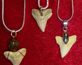 Shark Tooth pendant with Sterling Necklace