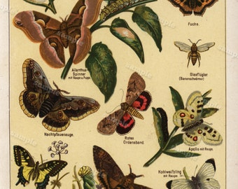 19th century Butterflies lithograph Antique Original old Dictionary page  Papillons Natural history Decorative butterfly