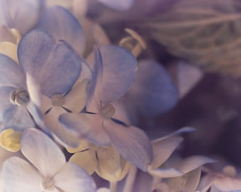 Flower Photography, Pastel Blue Hydrangea Flower Photo, Floral Home Decor, Horizontal Wall Art, Fine Art Macro Nature Photograph