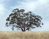 Tree of Life - Nature Photo, Fine Art Photo, Canberra, Australia, Mystical Cottage Chic, Tree Photo, Dark Wall Art - 8x12 Matte Finish