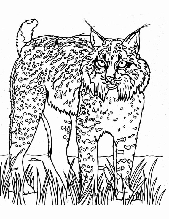 Iberian lynx wild cat printable coloring page downloadable for Wild cats coloring pages