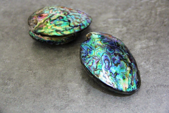 One Piece Abalone Shell 50x65mm Puffy Oval Shape