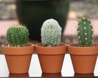 10 mini cactus in terracotta pots ship Aug 4