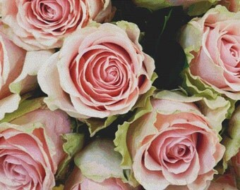 Pale Roses PDF Cross Stitch Pattern