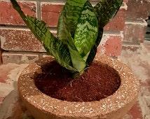 """Large 9"""" Hypertufa succulent planter & bowl (1 planter)"""