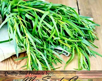 Tarragon, Russian Artemisia dracunculus, Herb Seeds - Used to accent meats, chicken, fish