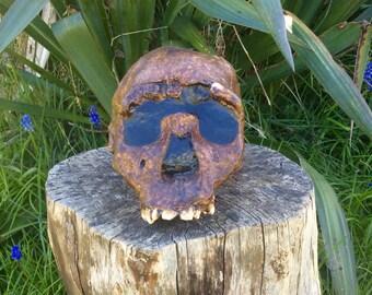 Homo Erectus Skull Feplica, Young Male Early Man Skull Sculpture