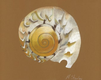 Print of an original pastel drawing of a shell