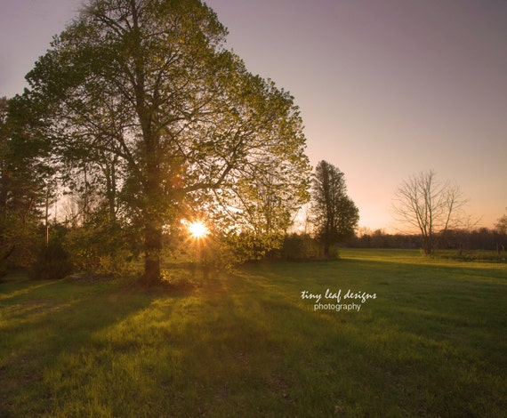 Spring Sunshine thru the Trees Original Photography