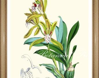 "Orchid #2. Botanical Print. Floral Prints. Botanical Wall Art.   5x7"", 8x10"", 11x14"", 13x19"""