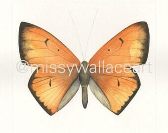 Butterfly #17 (Original)