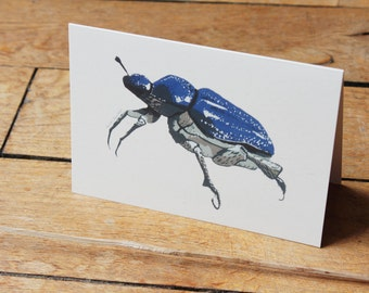 Postcard of the blue Hoplie