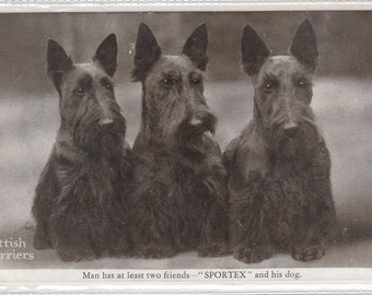 Advertising Sportex,3 Charming Scottish Terriers Posing Postcard Cirrca 1920
