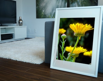 Yellow Flowers 3 of 6 Herb Calendula Pot Marigold Spring Georgetown Tx Photography Print Decor Wall Fine Art Photography Prints and Canvas