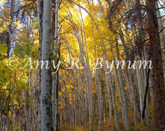 Mountain Path. Aspen Trees with Golden Leaves frame a path in Frisco, Colorado, USA. Fine Art Travel Photography, Canvas or Paper Print