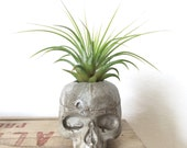 Mini concrete skull air planter