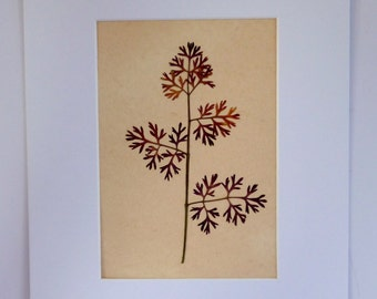 Real Pressed Flower Botanical Art Herbarium of Queen Anne's Lace Leaf 8x10 Vintage Style