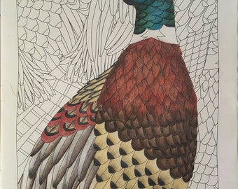Illustrated page from MindWare's Hidden Feathers regal pheasant high quality print