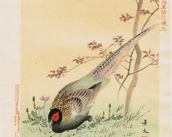 "1894, Japanese Woodblock print, antique, Matsumura Keibun, "" Pheasant"""