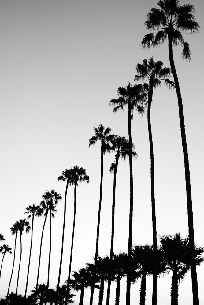 Black and white photography palm trees bathroom wall art black and white beach wall art vertical wall art bathroom wall decor