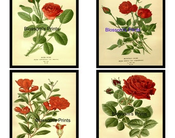 Set of 4 Flower prints Moss Rose, Monthly Rose, Pomegranate, Rose