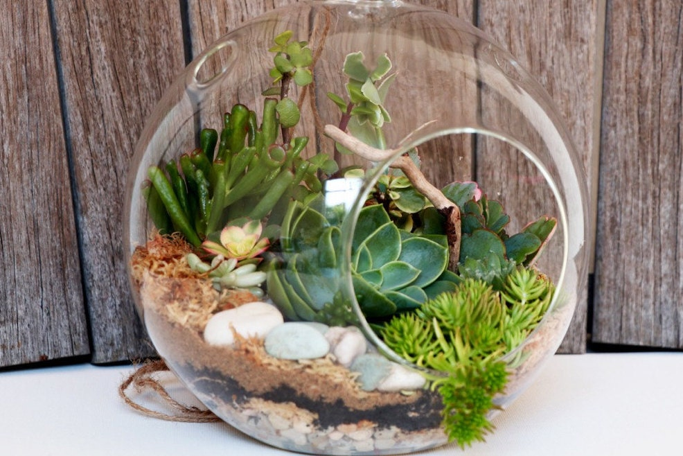 how to make a hanging succulent terrarium