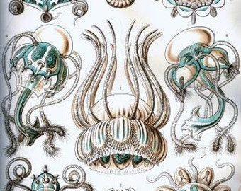 Ernst Haeckel Jellyfish artwork 19th century Wildlife art Paleontology artwork Zoology art History of science poster Ihappywhenyouhappy