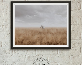 morning light 2 horse print color photography horse photo wall art horse in field colorado horse wilderness print equestrian art