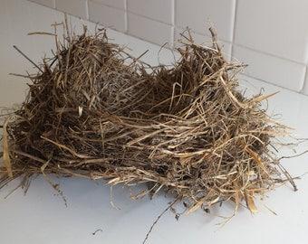 Bird's nest - Real - Robin's nest