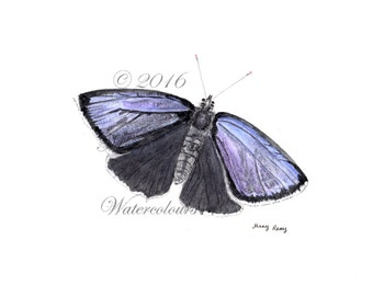 Purple Hairstreak butterfly print from original watercolour painting by Mary Reay,  A4 botanical print, butterfly illustration