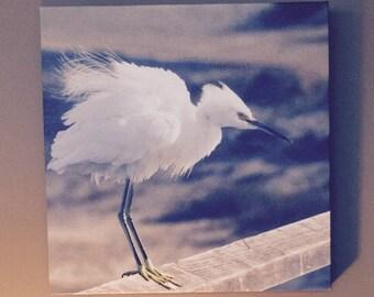 Snowy Egret on Canvas