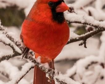 Cardinal Notecards