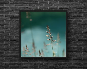 Blue Green Photo - Grass Photo - Weeds Photo - Meadow Photo - Nature Photography - Square Photo - Nature Wall Art - Botanical Wall Decor