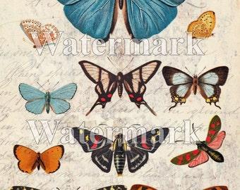 SALE Butterfly instant Digital Download - Printable Art - Paper Craft - Altered Art - illustration - Entomology -