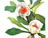 Flower Print - Franklinia, Stewartia - 2 Sided - 1950's Vintage Botanical Illustration - Vintage Book Page - 12 x 8