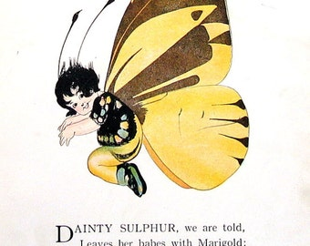 Dainty Sulphur Butterfly, Red Barred Sulphur Butterfly - 1914 Antique Book Page - Butterfly Babies, Butterfly Children - 9 x 6