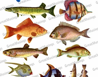 FISH Digital Collage Sheet download vintage images fishy sea life ocean trout goldfish pike No.316