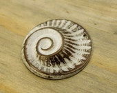 Shell Charm - Nautical Charm - Conch Shell Charms - Aged White Brass - Patina Queen - 1