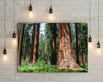 Redwood Forest Photography, California Trees Canvas Print, Nature Decor, California Wall Art, Sequoia Forest, Sierra Nevada Mountains