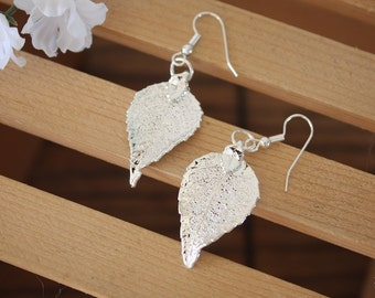 Silver Leaf Earrings, Evergreen Leaf, Real Leaf Earrings, Small Real Leaf Earrings, Evergreen, Sterling Silver, Nature, LESM121