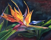 Bird of Paradise - Original 5x7-inches, Watercolor Painting by Prerana Kulkarni