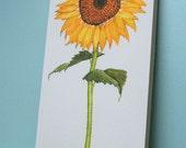 August Sunflower Flower Print Mounted Wood Block Floral