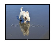 Beachcombing Westie Magnet Reflections - Westie Gifts Under 5 - Dog Lover Gifts - Westie Art - Stocking Stuffers - Last Minute Gifts