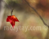 Maple Leaf Print, Nature Photography, Rustic Fall Photos, Red Orange Wall Art, Rustic Autumn Wall Art, Leaf Photo, Red Leaf Prints